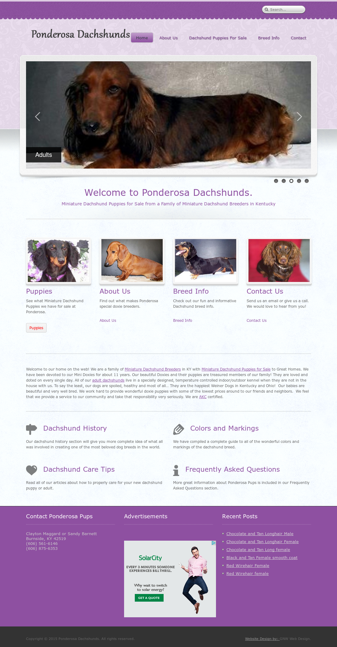 Ponderosa Dachshunds Competitors, Revenue and Employees