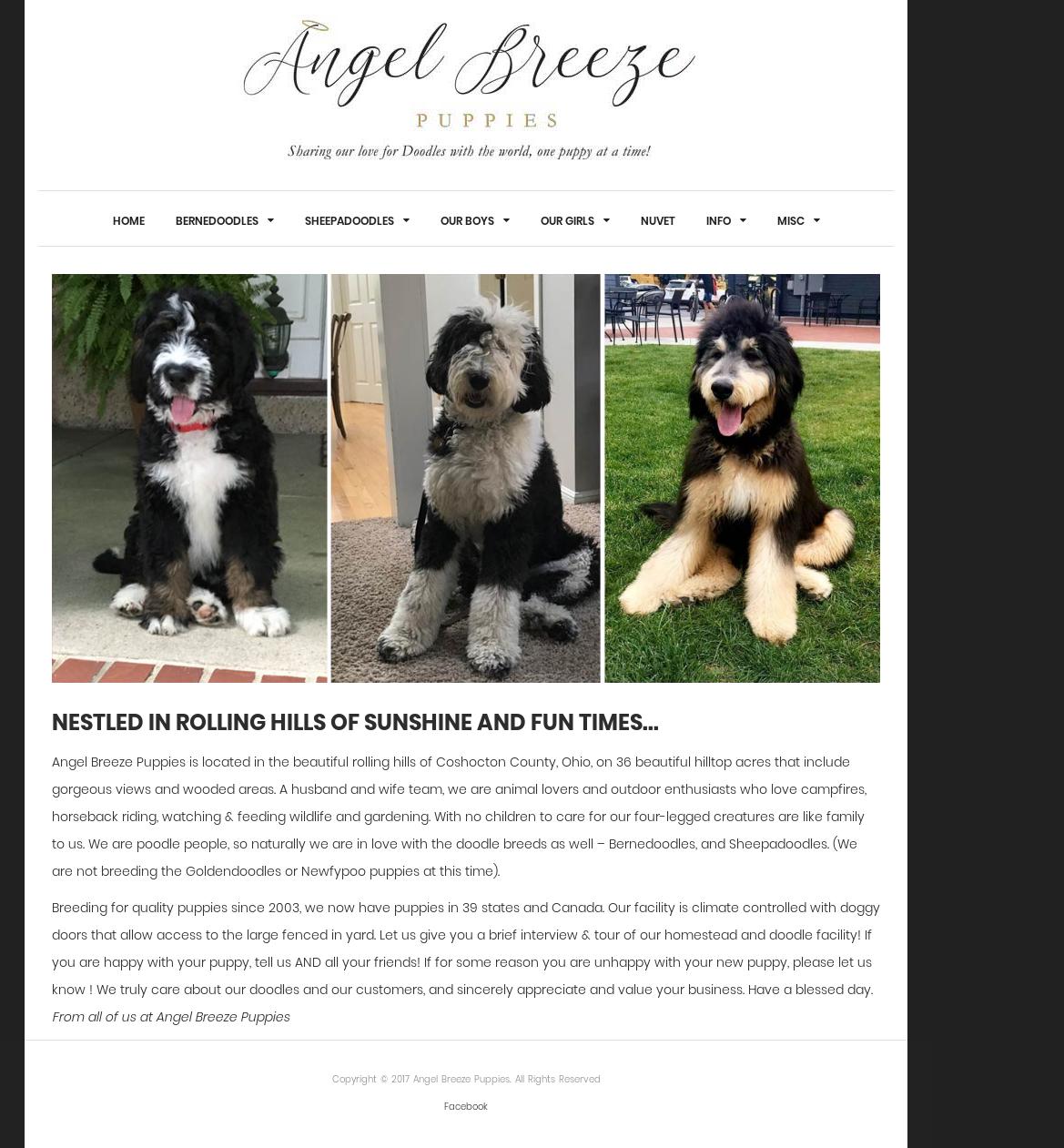 100 Pictures of Angelbreezepuppies