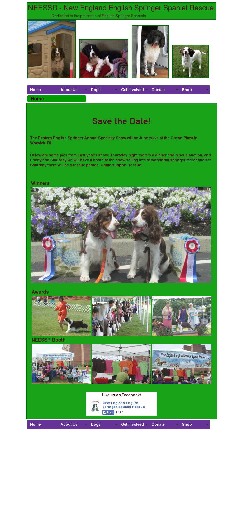New England English Springer Spaniel Rescue Competitors