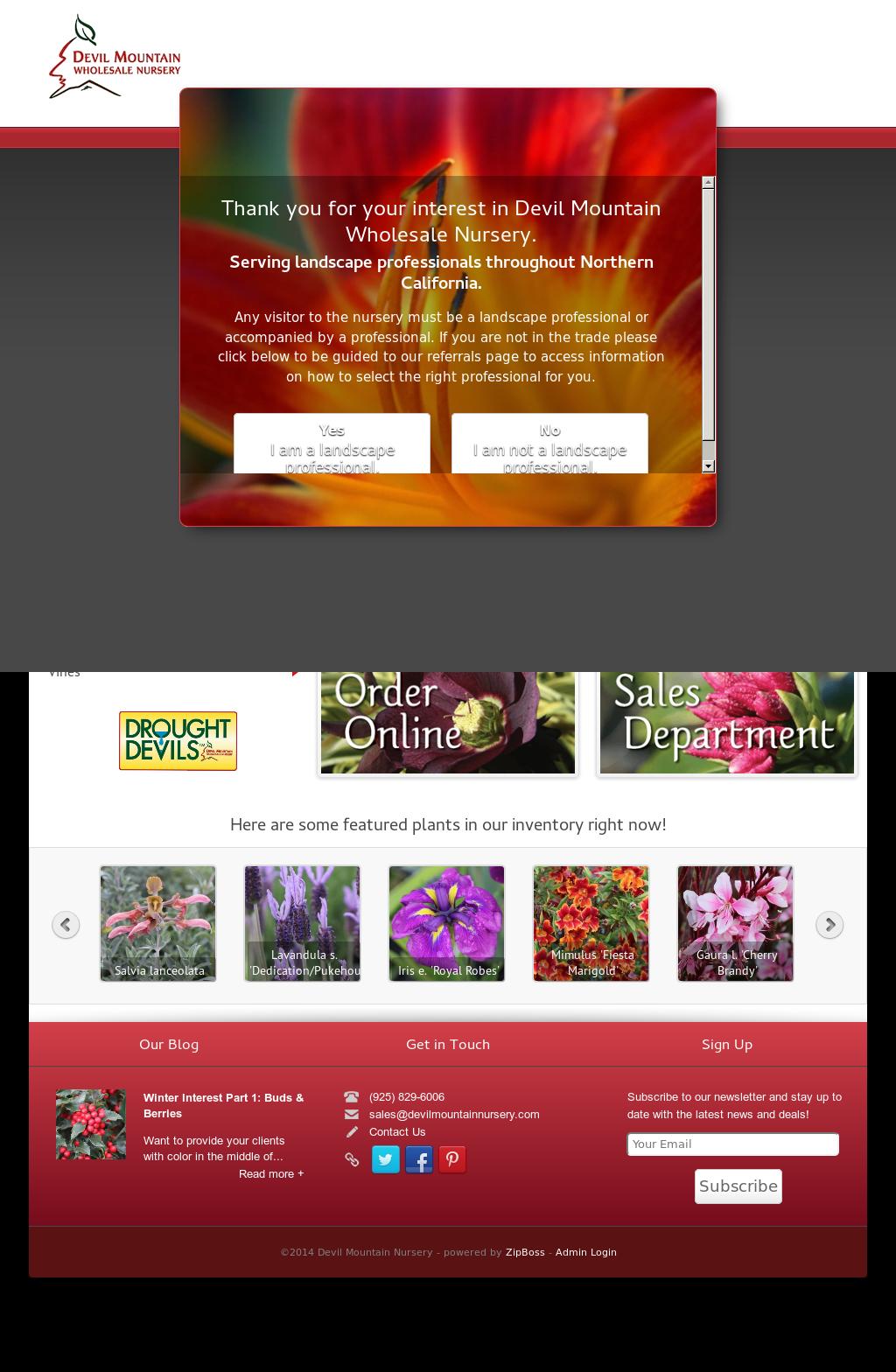 Devil Mountain Nursery Website History