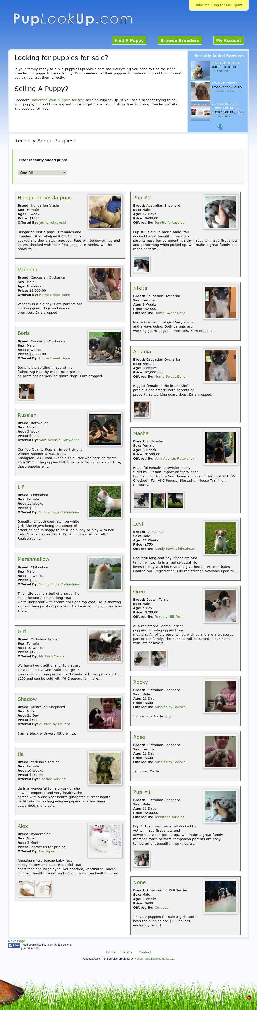 Dog Breeders - Puplookup Competitors, Revenue and Employees