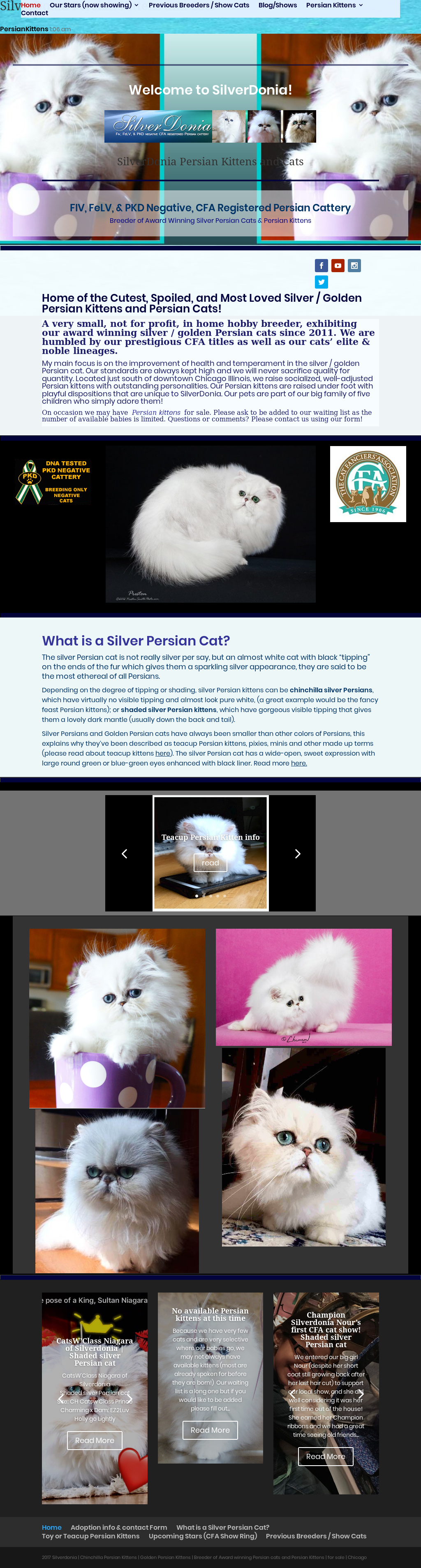 Owler Reports - Silverdonia Persians Blog Chinchilla Silver