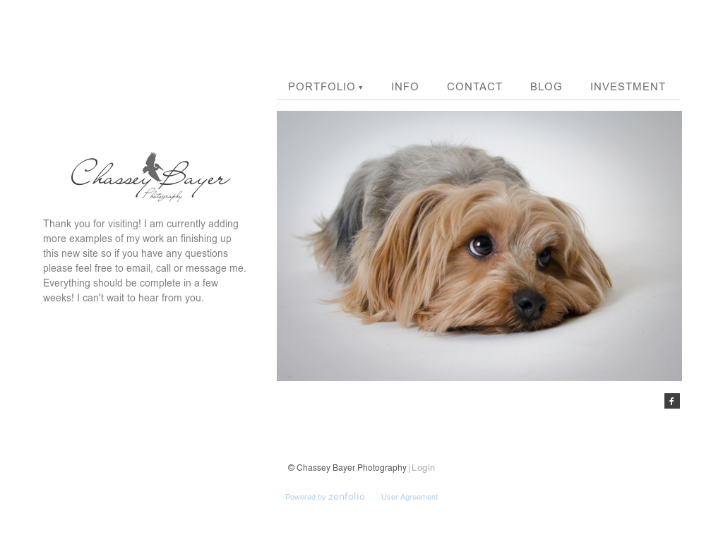 Chassey Bayer Photography Competitors, Revenue and Employees - Owler Company Profile
