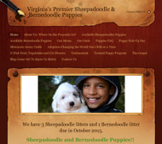 Sheepadoodle Puppies Usa Competitors, Revenue and Employees - Owler